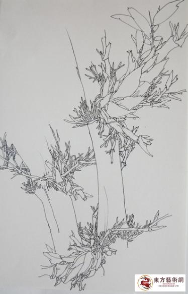 白描系列——竹子(二)图片